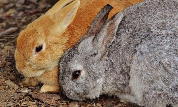La Californie interdit la vente de cosmétiques testés sur les animaux
