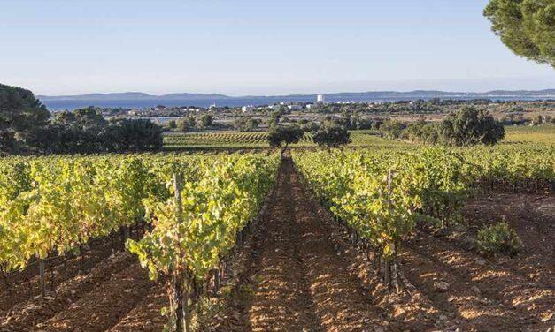 Le groupe LVMH s'offre son premier domaine viticole en Provence