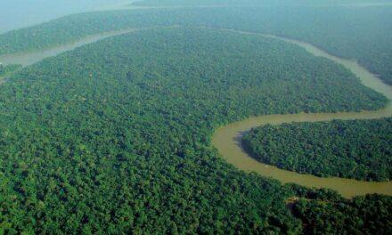 Amazonie : LVMH fait don de 10 millions d'euros pour lutter contre les incendies